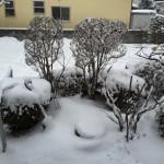 雪かきビフォー